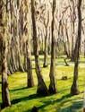 Magnolia-Swamp-Garden