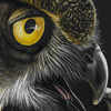 Thumb_03_Todd Reed_Wildlife_Wildife Art_Prints_Owl_Hawk_Great Horned Owl_Birds_Birds of Prey_Raptor_Graphite_Drawing_Pencil_Menacing Beauty_Color_500p
