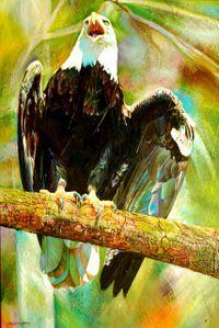 Eagle Large Web view