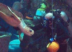Pumpkin Enrichment at the SC Aqariums Scaryum Aquarium