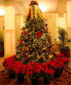 Francis Marion Hotel named Best U.S. Hotel for the Holidays by Travel & Leisure Magazine
