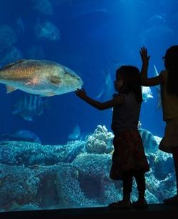 Holiday Gifts from the South Carolina Aquarium