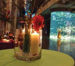 Event and wedding space at the South Carolina Aquarium