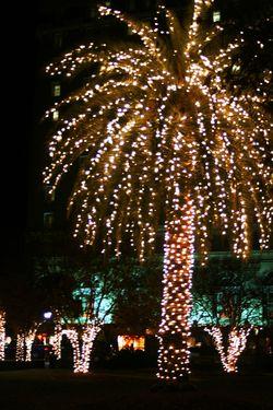 Market Street Tree Lighting