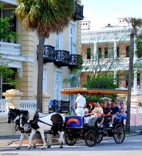 Palmetto Carriage Tour