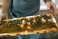 Savannah Bee Company Bee Cause Project