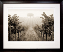 Ben Ham Images Alexander Valley Cab No. 5