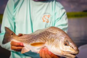 Charleston Angler