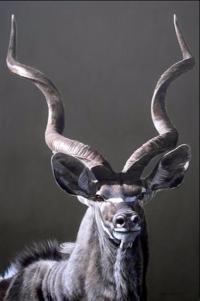 Silver Goat Stefano Cecchini